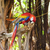 colorful parrot sitting on the tree stock photo © nejron
