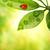 joaninha · sessão · fresco · grama · verde · raso - foto stock © nejron