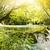воды · весны · лес · аннотация · лист · стекла - Сток-фото © nejron