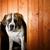 フロント · 表示 · 犬 · 木材 · 青 · 屋根 - ストックフォト © nejron