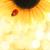 Ladybug · подсолнечника · цветок · красоту · лет · красный - Сток-фото © nejron