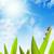 sereen · zonnige · veld · weide · voorjaar · gelukkig - stockfoto © nejron
