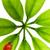 joaninha · sessão · verde · planta · isolado · branco - foto stock © nejron