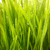 close up shot of green grass with rain drops on it stock photo © nejron