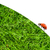 vermelho · joaninha · grama · verde · isolado · branco · primavera - foto stock © nejron