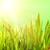 свежие · трава · капли · роса · зеленый · экология - Сток-фото © nejron