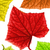 makro · kişniş · ot · bitki · yaprakları · yalıtılmış - stok fotoğraf © nejron
