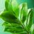 friss · zöld · levelek · napsütés · felhők · természet · fák - stock fotó © nejron