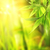 画像 · 緑の葉 · 抽象的な · ぼやけた · ツリー · 春 - ストックフォト © nejron
