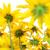 fényes · napraforgó · izolált · fehér · virág · nap - stock fotó © nejron