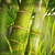 green plant close up stock photo © nejron