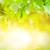 yaprakları · gümüş · huş · ağacı · beyaz · yüzey · taze - stok fotoğraf © nejron