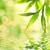 bambou · forêt · soleil · flare · asian · paysage - photo stock © nejron