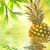 ananas · water · groene · natuur · vruchten · drinken - stockfoto © nejron