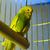 blau · gelb · Käfig · Schönheit · Farbe · fliegen - stock foto © nejron