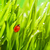 joaninha · verde · 3d · render · primavera · grama · natureza - foto stock © nejron