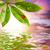katicabogár · zöld · levél · izolált · fehér · tavasz · fény - stock fotó © nejron