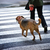 man with a dog crossing the street stock photo © nejron