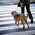 собака · владелец · привязь · такса · колбаса · ждет - Сток-фото © nejron