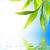bambú · hojas · aislado · blanco · hierba · hoja - foto stock © nejron