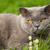 kedi · profil · güzel · çizgili · kahverengi · sığ - stok fotoğraf © nejron