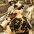 strzelec · wyborowy · karabin · szkła · tle · pistolet - zdjęcia stock © nejron