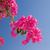 virágzó · tavasz · rügy · reggel · fény · napos - stock fotó © nejron
