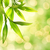 bamboo leaves over abstract blurred background stock photo © nejron
