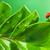 joaninha · fresco · folhas · verdes · água · abstrato · natureza - foto stock © nejron