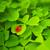 joaninha · sessão · grama · verde · céu · jardim · fundo - foto stock © nejron