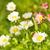 てんとう虫 · 座って · 花 · 蝶 · 春 · 夏 - ストックフォト © nejron