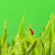 joaninha · sessão · grama · verde · água · primavera · grama - foto stock © nejron