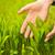 газона · рук · красивой · лет · девушки · Бикини - Сток-фото © nejron