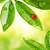 pequeno · bicho · folha · planta · flor · água - foto stock © nejron
