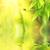 joaninha · sessão · bambu · folhas · primavera · natureza - foto stock © nejron