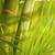 zöld · bambusz · levelek · absztrakt · elmosódott · fa - stock fotó © nejron