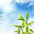 bamboo leaves over blue sky stock photo © nejron