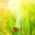 ladybug sitting on a fresh green grass shallow dof stock photo © nejron