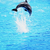 dolphin jumping in the sea stock photo © nejron