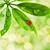 joaninha · folha · verde · isolado · branco · primavera · grama - foto stock © nejron