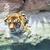 tigre · natureza · verde · boca - foto stock © nejron