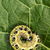 lagarta · folha · verde · textura · abstrato · luz · projeto - foto stock © nejron