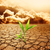 zöld · növény · növekvő · halott · föld · égbolt - stock fotó © nejron