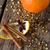 сушат · оранжевый · звездой · анис · корицей · звезды - Сток-фото © nelosa