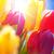 sunny blue sky with bouquet of tulip flowers stock photo © nelosa