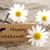 naturales · etiqueta · feliz · acción · de · gracias · mirando · etiqueta - foto stock © nelosa