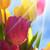 güneşli · lâle · çiçek · çayır · gökyüzü - stok fotoğraf © nelosa