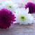 viola · fiori · bianchi · legno · copia · spazio · primavera - foto d'archivio © Nelosa
