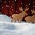 karácsonyi · üdvözlet · jávorszarvas · pár · hó · boldog · új · évet · piros - stock fotó © nelosa