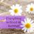 poder · pequeno · roxo · flores · florescer - foto stock © nelosa